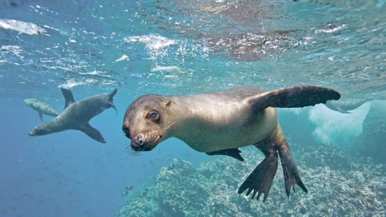 melhores cruzeiros para galápagos